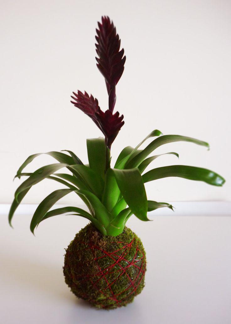 Plantas de interior decoraci n saludable innovarq - Plantas para decoracion de interiores ...