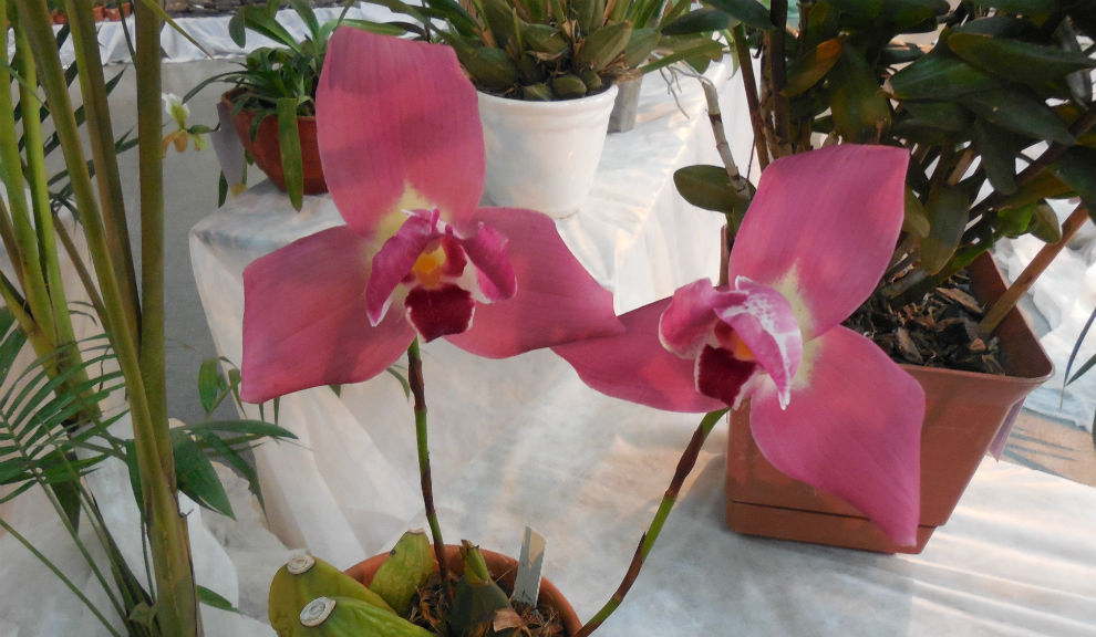 Fiesta de las Orquídeas 2014_1