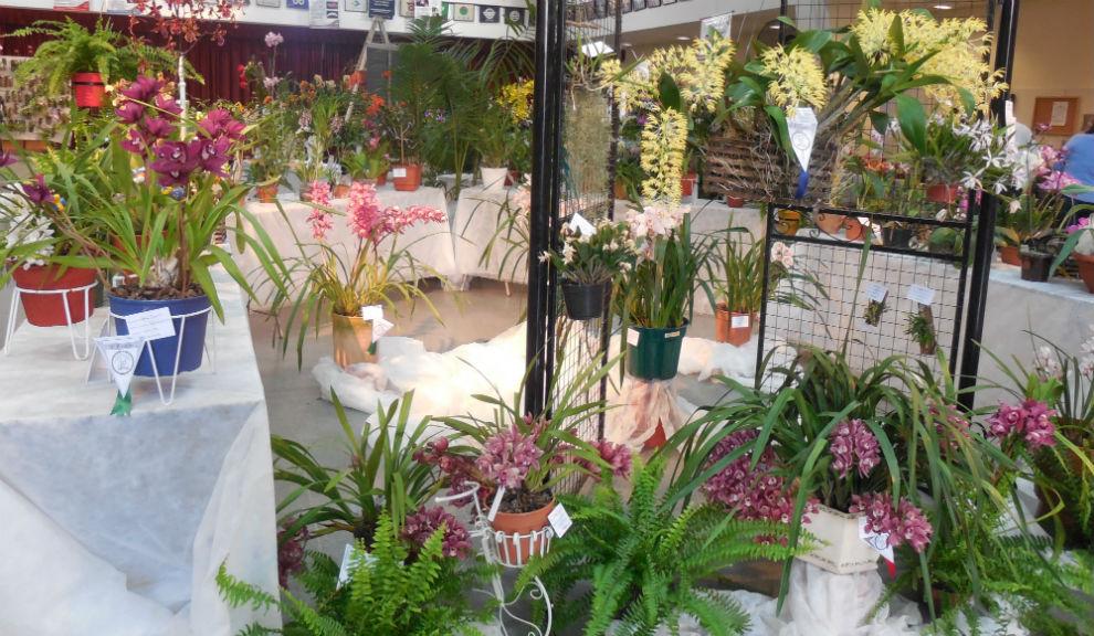 Fiesta de las Orquídeas 2014_3