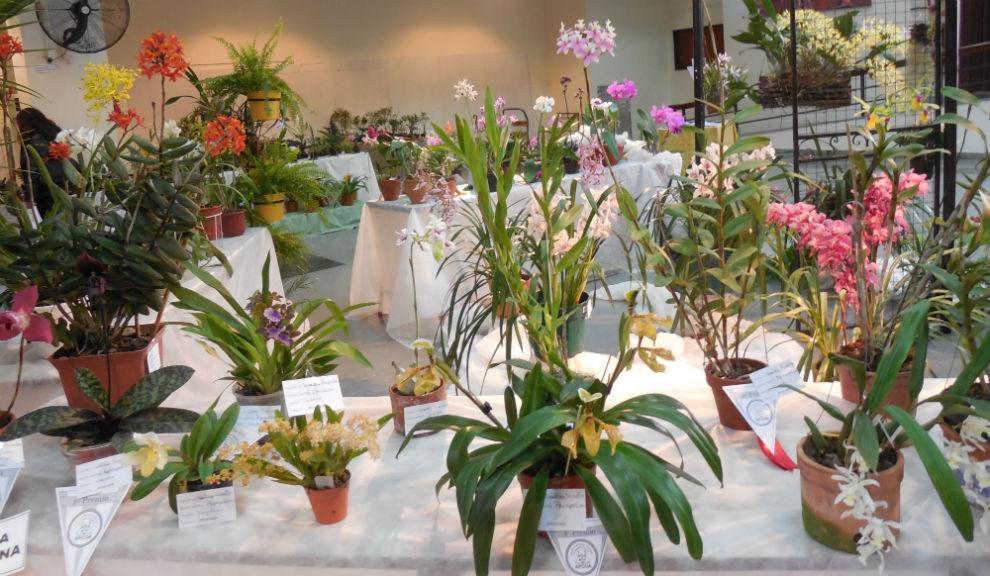 Fiesta de las Orquídeas 2014_6