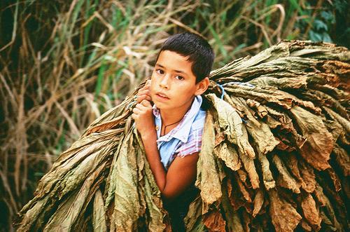 La industria tabacaleras financia los programas de la Asociación Conciencia con un ínfima parte de lo que se ahorra con la explotación de menores en los cultivos de tabaco.
