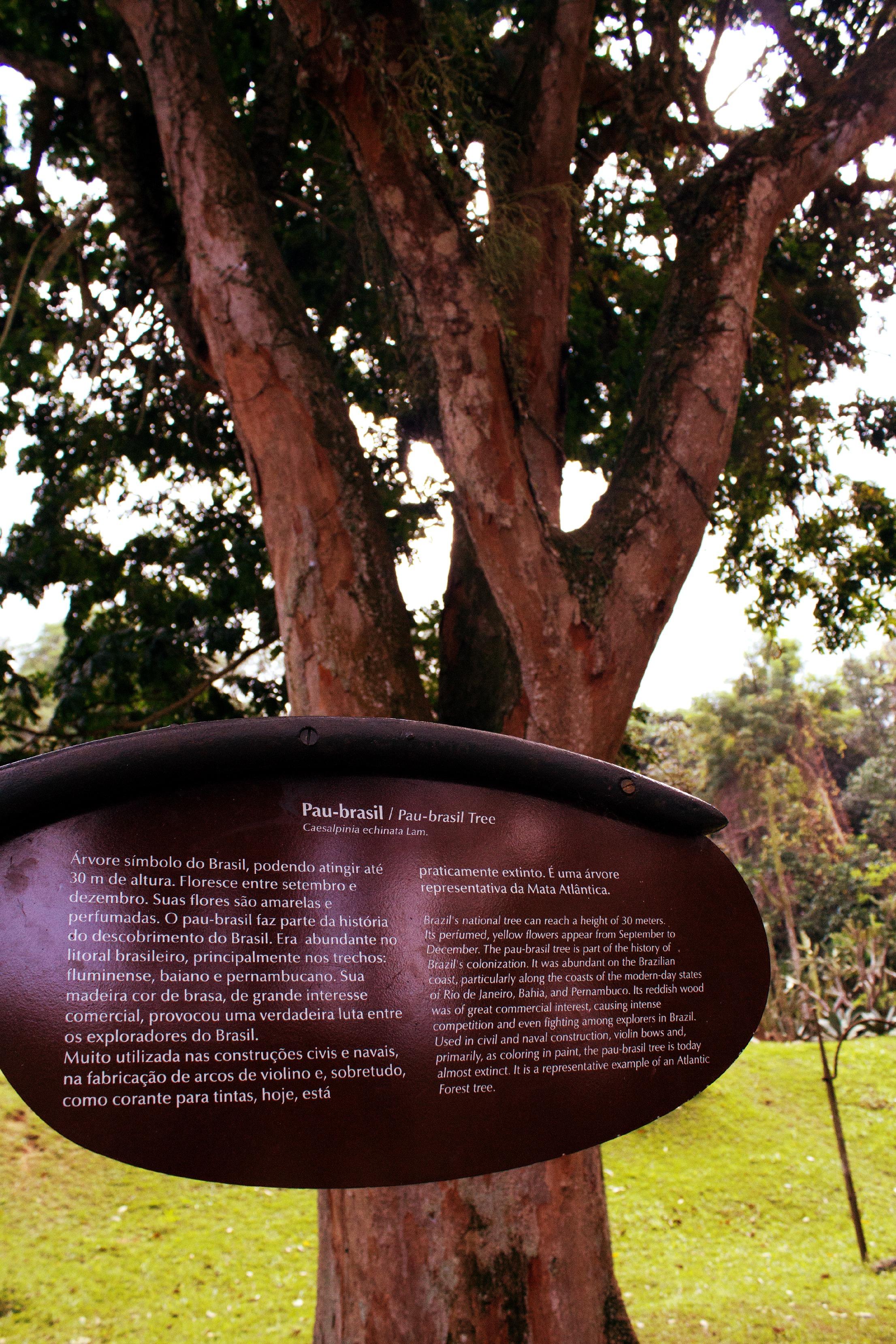 La mayoría de los Stradvarius están construídos con madera de pau-brasil