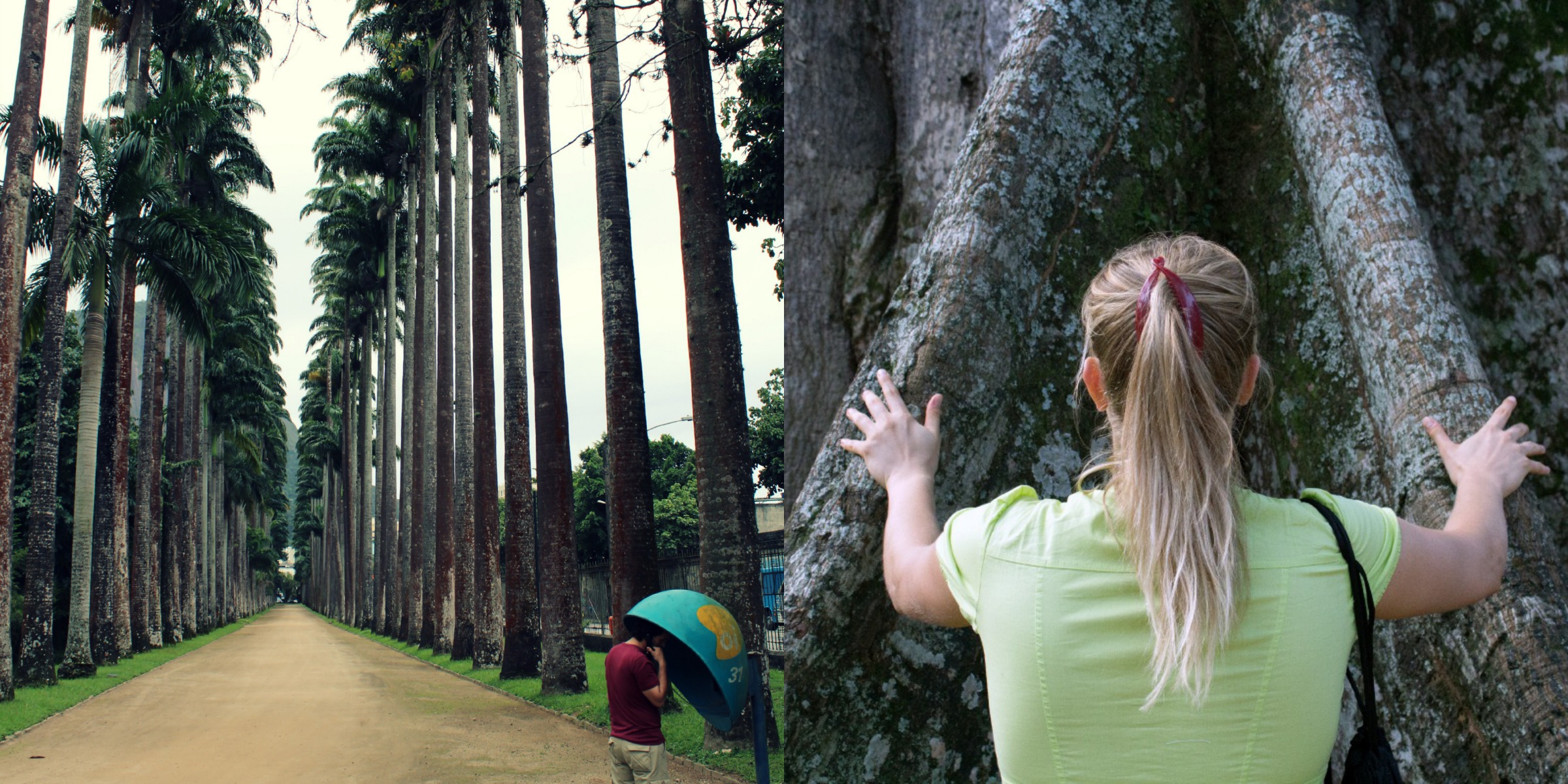 Palmeras imperiales de la Aleia Cándido Baptista y ceiba pentandra, la mayor del Jardim, conocida como el árbol de Tom Jobim
